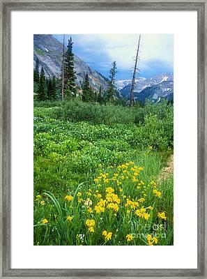 Summer Vista Near Durango Framed Print