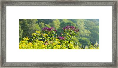 Summer Weeds, Cuyahoga Valley National Framed Print