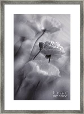 summer whispers II Framed Print