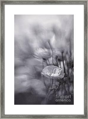 Summer Whispers Iv Framed Print by Priska Wettstein