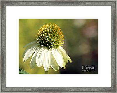 Summer White Framed Print by Mary Haber