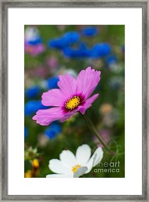 Summer Wild Blooms Framed Print by Matt Malloy