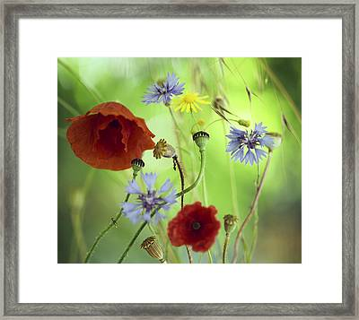 Summer Wildflower Color Framed Print