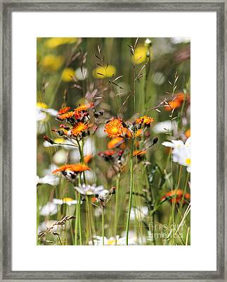 Summer Wildflowers Framed Print
