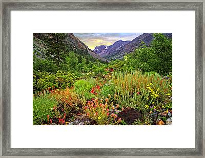 Summer Wildflowers In Lundy Canyon Framed Print