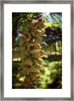 Summerheat Framed Print by Simone Ochrym