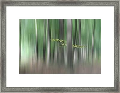 Summermorning Framed Print