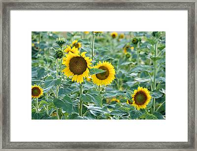 Summer's Best Framed Print