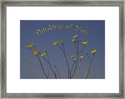 Summers Days Framed Print by Shirley Mitchell
