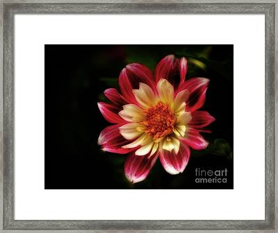 Summers Dream - Awaiting Pollination Framed Print