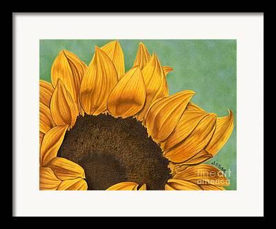 Sunflower Garden Drawings Framed Prints