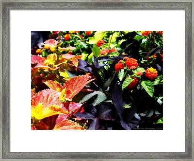 Framed Print featuring the photograph Summers Floral Colors by Deborah Fay
