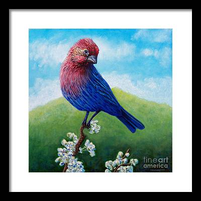 Finch Framed Prints