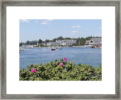 Summertime In Maine Framed Print