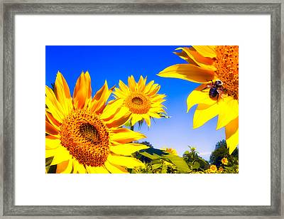 Summertime Sunflowers Framed Print by Bob Orsillo