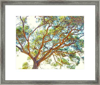 Framed Print featuring the photograph Summertime Tree by Jocelyn Friis