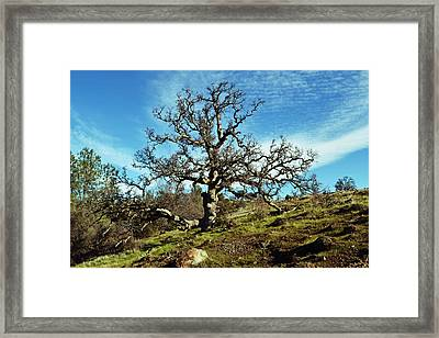 Summit Of Monkey Face Framed Print