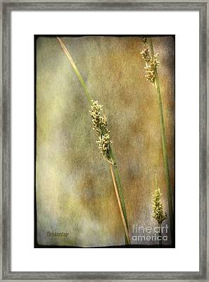 Framed Print featuring the photograph Summr Grasses V by Chris Armytage