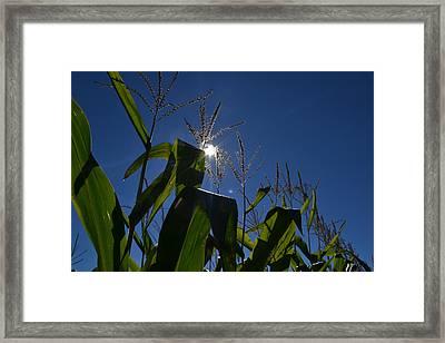 Sun Above The Corn  Framed Print by Lyle Crump