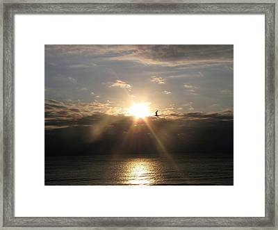Sun And Gull Framed Print