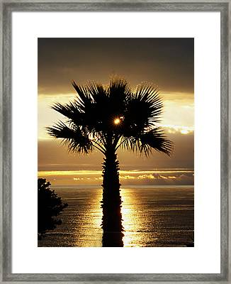 Sun And Palm And Sea Framed Print