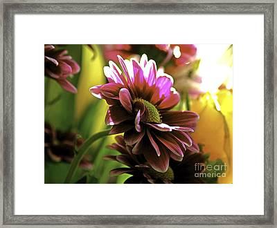 Framed Print featuring the photograph Sun Bath by Lori Mellen-Pagliaro