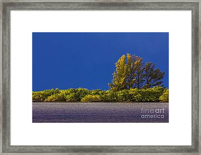 Sun Bathed Framed Print by Marvin Spates