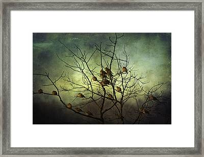 Sun Bathing Framed Print by David Simons