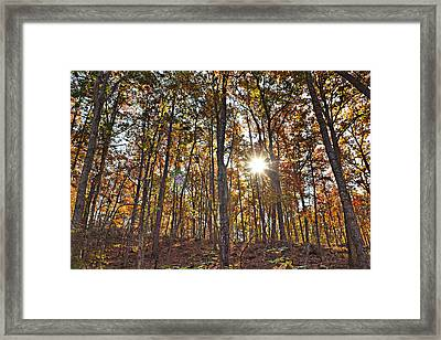 Sun Beams Dance In Autumn Trees Framed Print