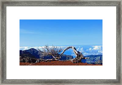 Sun Bleached Tree Framed Print by Callan Percy