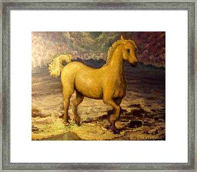 Sun Blessed Horse Framed Print by Graham Keith