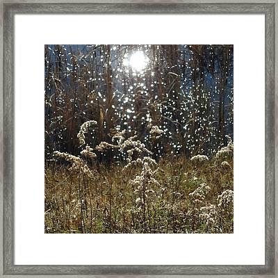Sun Dance Framed Print by Catherine Arcolio