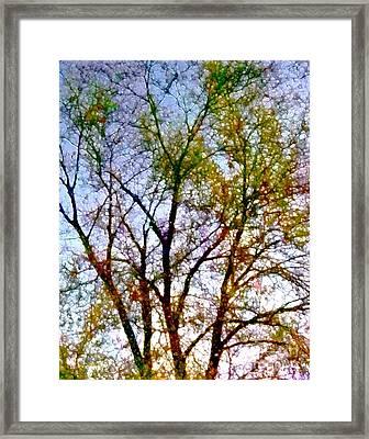 Sun Dappled Framed Print