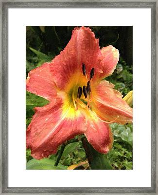 Sun Day Lilly  Framed Print