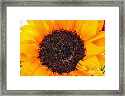 Sun Delight Framed Print