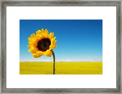 Sun Drenched Dreams Framed Print