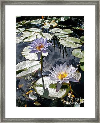 Sun-drenched Lily Pond         Framed Print by Kaye Menner