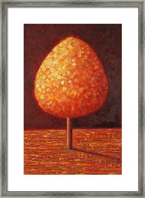 Sun Drenched Tree Framed Print by Peter Davidson
