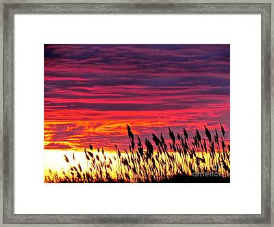 Sun Drifts To Sleep Framed Print by Q's House of Art ArtandFinePhotography