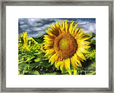 Sunflower Drawing  Framed Print