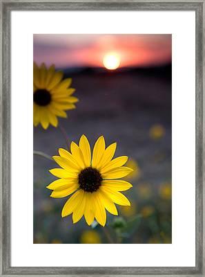 Sun Flower II Framed Print