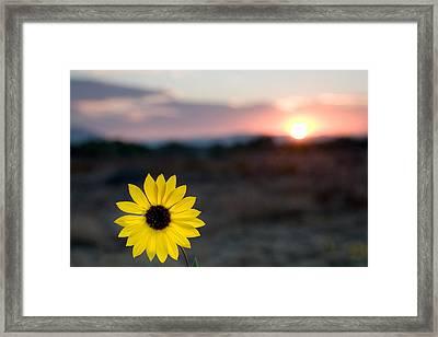 Sun Flower IIi Framed Print