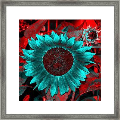 Sun Flower Reverse Framed Print