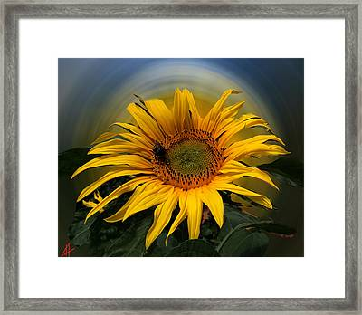 Sun Flower Summer 2014 Framed Print