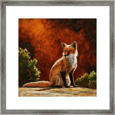 Sun Fox Framed Print by Crista Forest