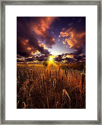 Sun Gazing Framed Print by Phil Koch