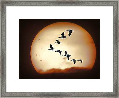 Sun Geese Framed Print