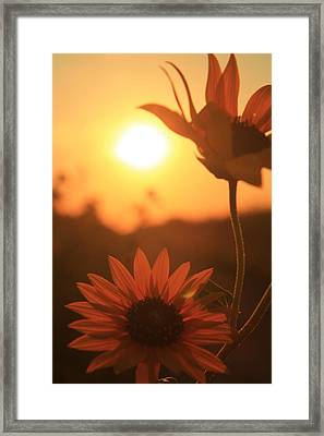 Framed Print featuring the photograph Sun Glow by Alicia Knust