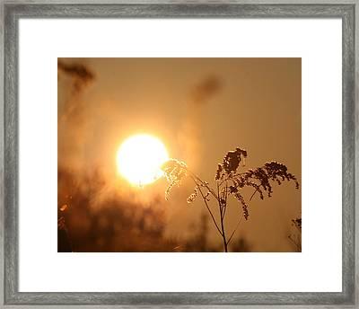 Sun God  Framed Print by Neal Eslinger