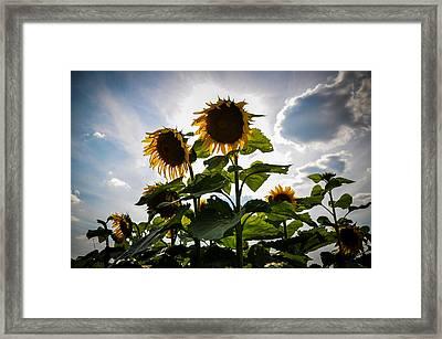 Sun Gods Framed Print